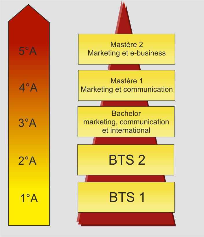 schéma etudes bachelor master