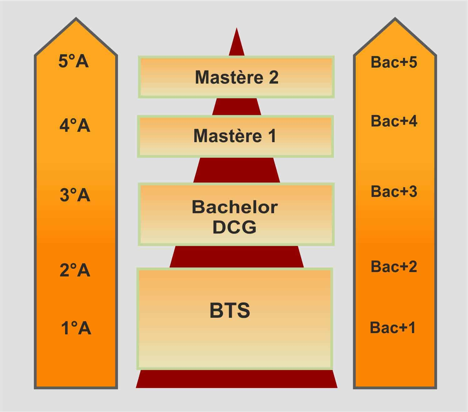 bts bachelor dcg mastere